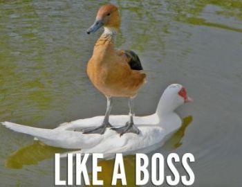 1364145632_boss.jpg