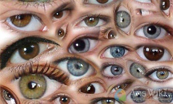 От чего зависит цвет глаз