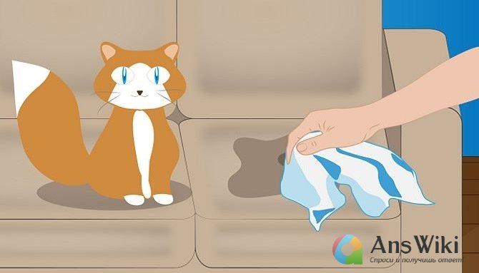Как избавиться от кошачьего запаха - качество ру.